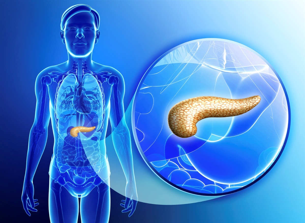Significance of the Pancreas