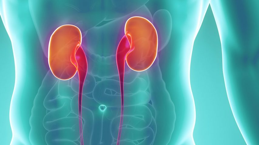 Physiology of Kidney